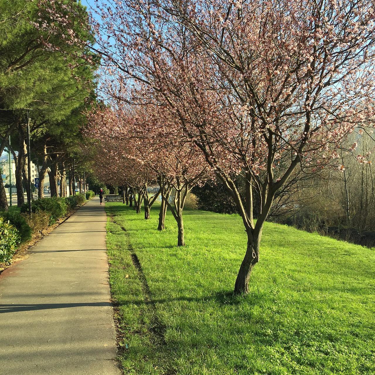 spring-2065842_1280